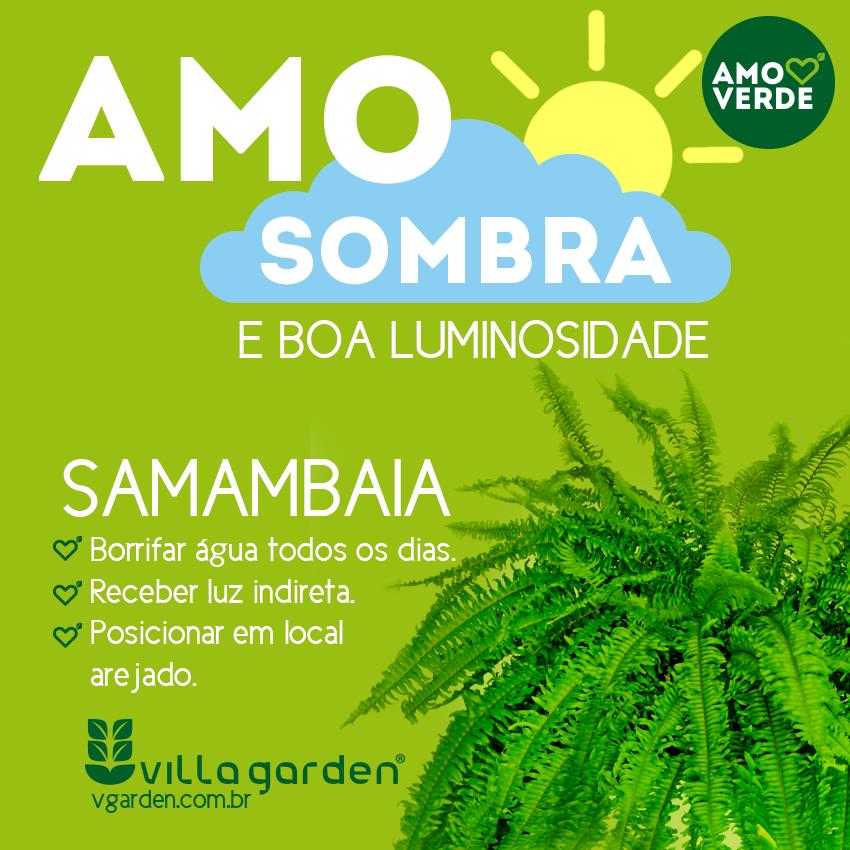 amo-samambaia